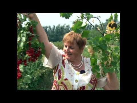 Сад и огород-97 Смородина черная и красная.