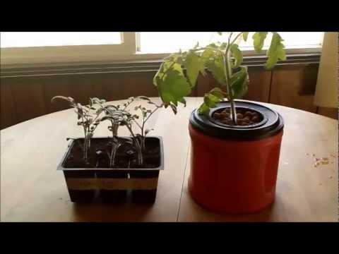 Soil vs hydroponics seed starting youtube for Soil vs hydro