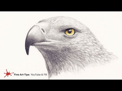 HOW TO DRAW A GOLDEN EAGLE´S HEAD - Narrated