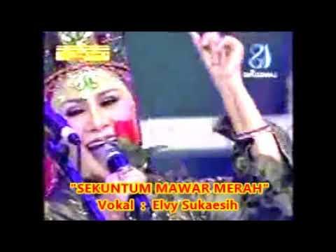 (1,065) Elvy Sukaesih : SEKUNTUM MAWAR MERAH - Cipt. Rhoma Irama