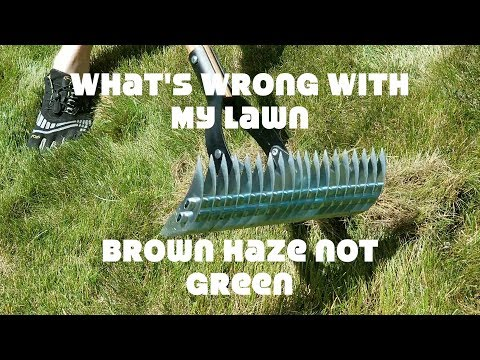 Mulching your grass clippings?  Overwatering, Hazy lawn, dead grass, fungus?  thatch and power rake