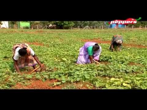 Organic Vivasayi - Farmer Shivasakthi  | 30 Apr 2017