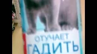 прикольное видео с котятами онлайн без смс и регистрации