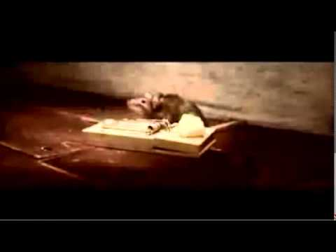 Nolan's Cheddar Cheese Commercial