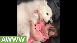Loving samoyed preciously cuddles with cute baby