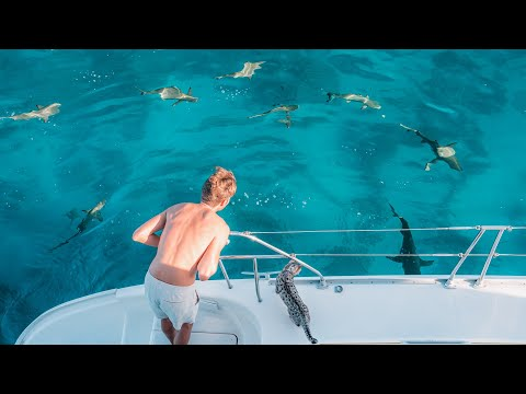 Surrounded by SHARKS 🦈 Let's Go SWIM! 🏊♀️ || Fakarava Sailing and Diving