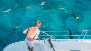 surrounded-by-sharks-let-s-go-swim-fakarava-sailing-and-diving