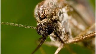 как правильно выбрать репелленты от клещей и комаров ?