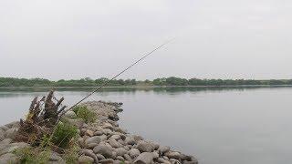 惨敗-木曽川ケレップ水制の野鯉釣り