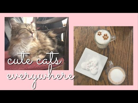 ♡ Montreal's Only Cat Cafe ♡
