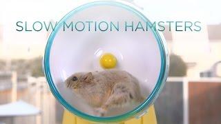 Hamster wheel in slow motion