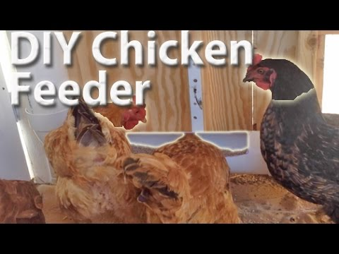 DIY PVC Chicken Feeder | How to Build It. HomeSteadHow.com!