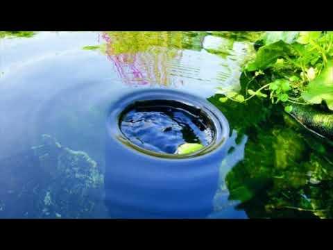 DIY Pond Box
