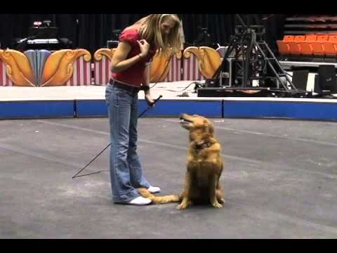 Animal Trainers Prepare for Circus Performance