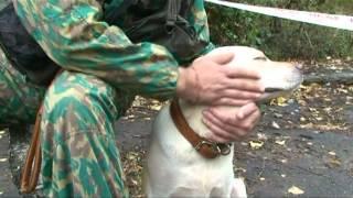 Фильм про спасательных собак
