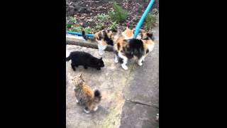 Три кошки трехцветные - СЧАСТЬЕ в доме - 3 часть. Продолжение следует....