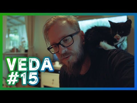 The kittens first day in his new home! - #VEDA 15 - Video Every Day in August