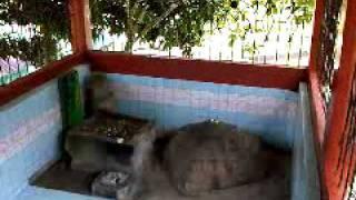 Video Crying Stone - Batu Menangis - Permandian Air Panas - Suban - Curup - Bengkulu download MP3, 3GP, MP4, WEBM, AVI, FLV Desember 2017