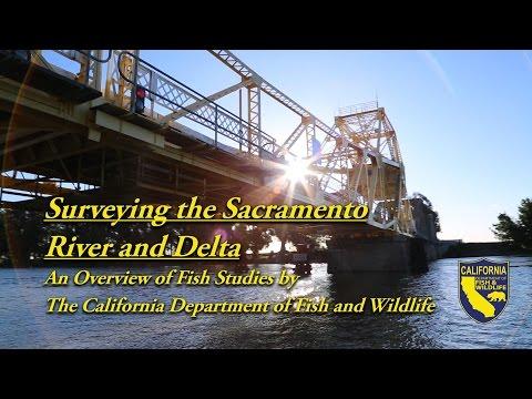 Surveying The Sacramento River And Delta