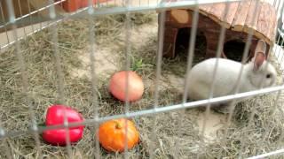 Все О Домашних Животных: Декоративные Кролики