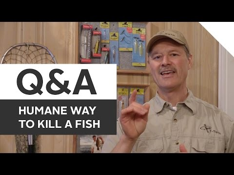 Fishing Q&A - Killing A Fish Humanely, Keeper Sizing, And Catfish