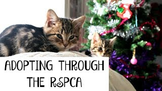 WHAT'S IT REALLY LIKE TO ADOPT KITTENS THROUGH THE RSPCA | Part 1