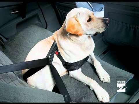 Qua la zampa trasporto animali in automobile Antenna 2 TV 15052012.mpg