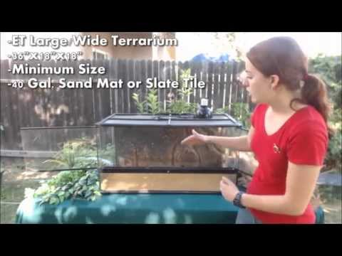 What is a good size enclosure for a bearded dragon?