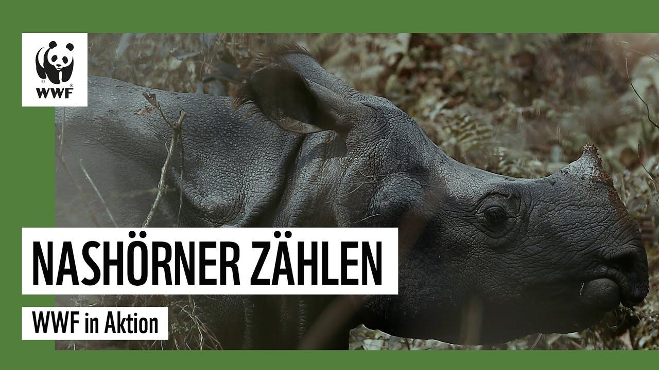 Nach Fast-Ausrottung: Zahl der Nashörner in Nepal steigt!