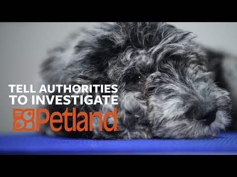 Petland: How Sick Is That Puppy In The Window?