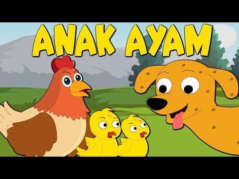 tekotekotek-anak-ayam-|-daftar-lagu-anak-anak