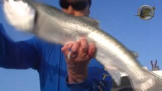 pescadoradatanero REO PESCA FISHING PECHE  SALMON en agua salada.wmv