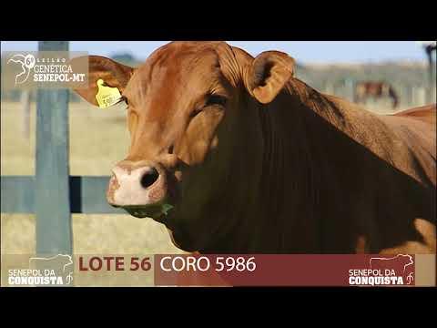 LOTE 56 CORO 5986