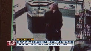 Surveillance catches thief stealing reptiles