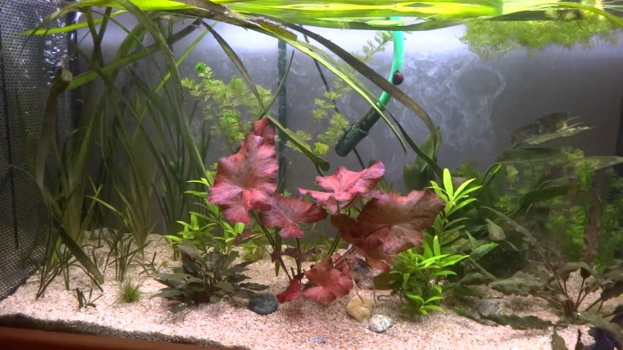 maxresdefault Luxe De Crevette Aquarium Des Idées