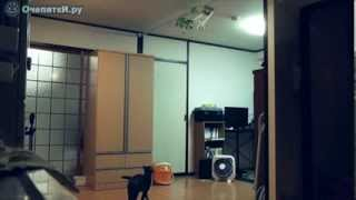 Прыжки кота в высоту [Jumping cat in height]