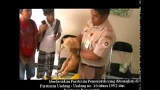 film dokumenter karya Abbe dkk Kelas 4 SD Hikmah Teladan