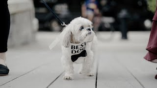 Cutest Dogs in Weddings    Dog Walks Down the Aisle