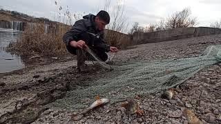 Ловлю рыбу в Нерестовый период Кастинговой сетью рыбалка удалась