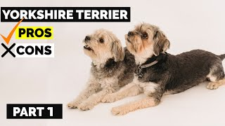 Yorkshire Terrier Pros & Cons   Why You Should Have A Yorkie Terrier? Part 1   Dog Jaw Dropping Fact