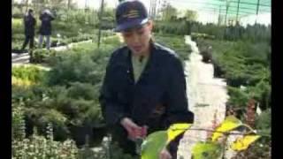видео продажа растений в донецке
