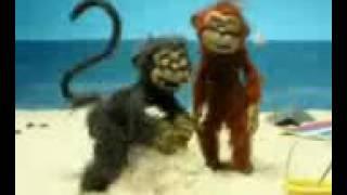 обезьяна хочет секса