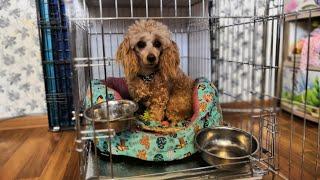 Клетка для собак TRIOL. Обзор и правильное использование.