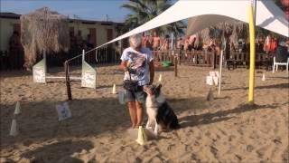 """Rimini Dog No Problem - Dimostrazione Di Rally Obedience E Agility """"centro Cinofilo Lago Riviera"""""""