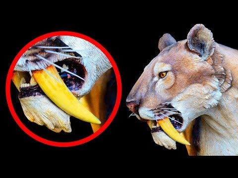 10 Extinct Animals Scientists Are Ready to Bring Back