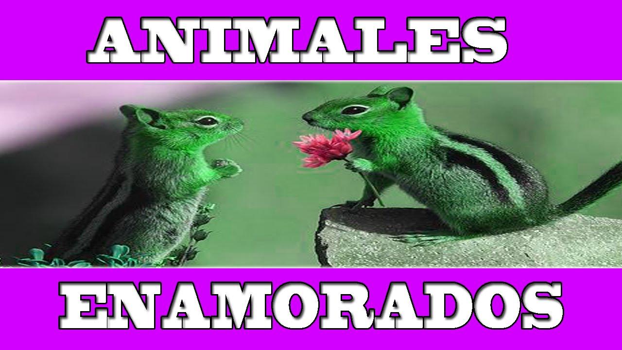 Imagenes De Amor: ANIMALES ENAMORADOS: Tiernas Y Bonitas Imagenes, Imagenes