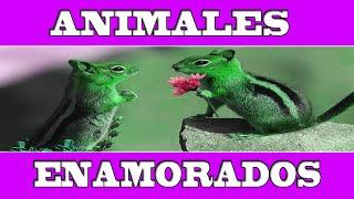 ANIMALES ENAMORADOS: Tiernas y bonitas imágenes de amor y amistad.