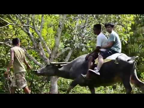 First time riding a Carabao. Adventures in Bohol, Philippines 2016