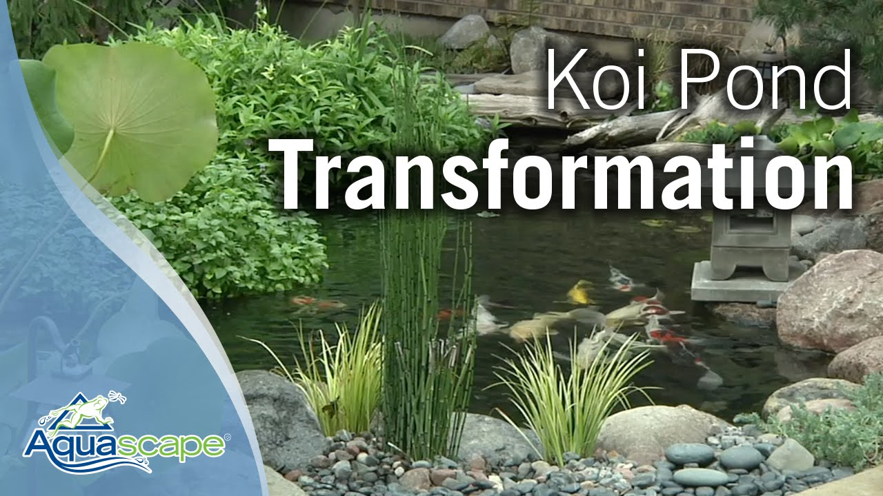 Koi Pond Transformation With Aquascape Youtube