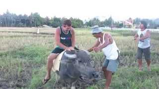 #BecomingFilipino - Riding a Water Buffalo, Camiguin
